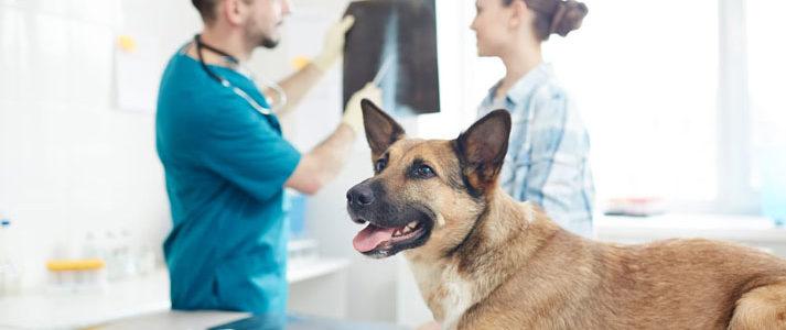 Urgences vétérinaires à Toulouse